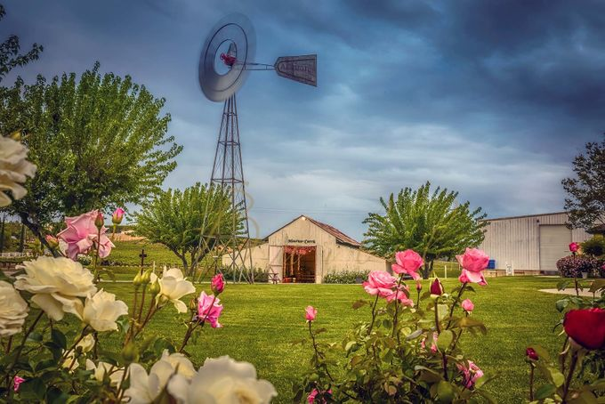 maurice-roses2 by matthewburlile - Farms And Barns Photo Contest