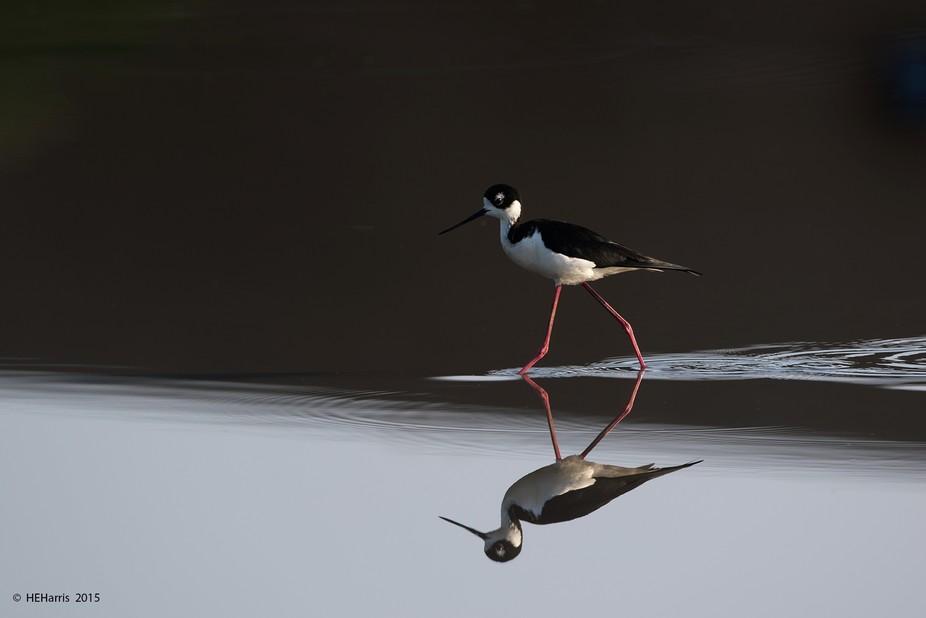 Image captured at San Joaquin Wildlife Sanctuary in Irvine Calif.