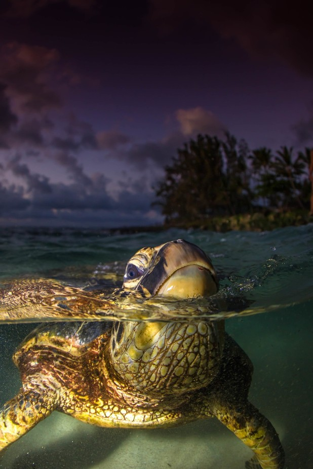 HONU SUNSETS by BARREL_JUNKIE_PHOTOS - Our World At Night Photo Contest