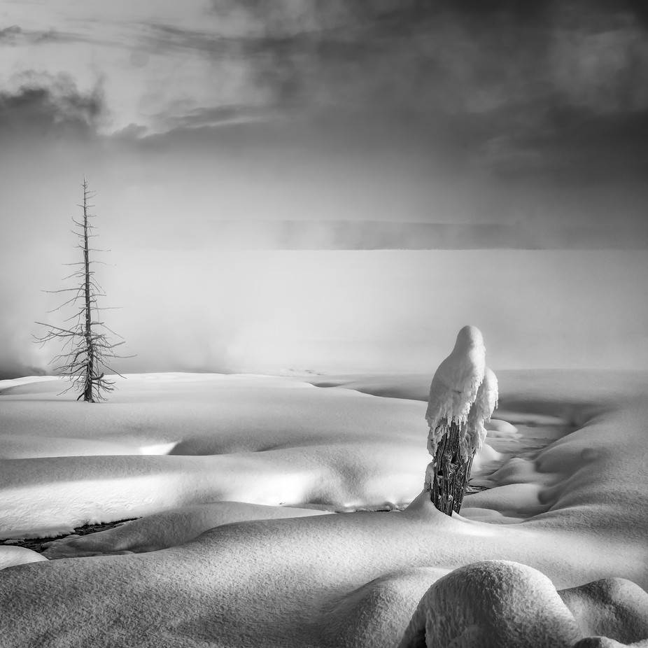 Silence in Yellowstone by timboten - Winter In Black And White Photo Contest