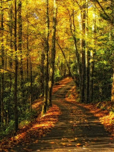 A Road Through the Yellow Woods