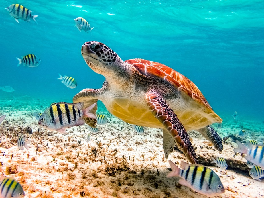 Snorkeling in Mexico, the turtle love to visit us.