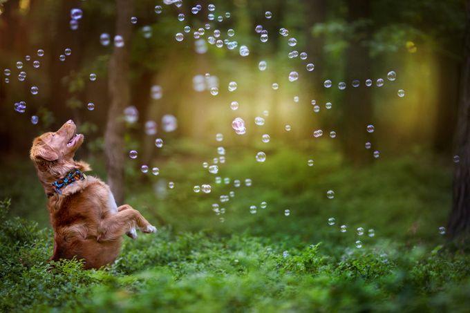 bubbles everywhere ! by Marcin_Rutkowski - Bubbles Photo Contest