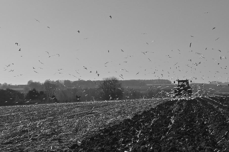 Tractor's Flock