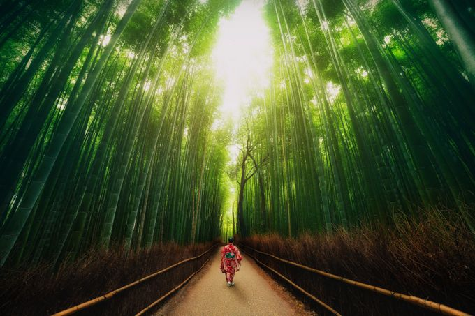 The Bamboo Forest by peterstew