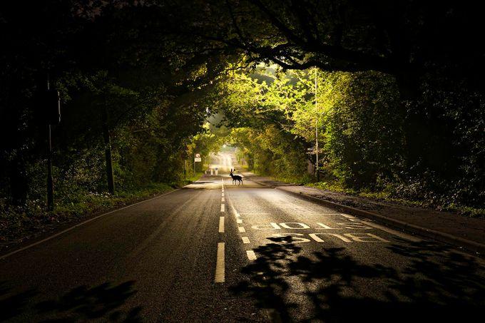 Noak hill rd Deer by bazzaboy09 - The Zen Moment Photo Contest