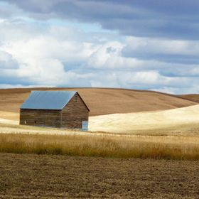 I travel to Idaho to visit a very good friend, and love this drive in the Palouse country.  Old Barns call my name, so no matter what time of yea...