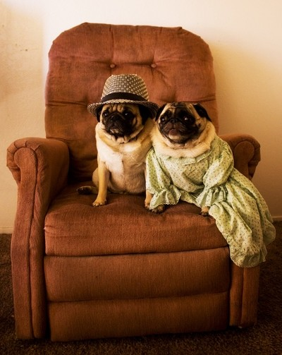 Mr. & Mrs. Pug