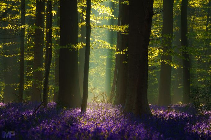 The Blue Forest by martinpodt - Shades Of Purple Project