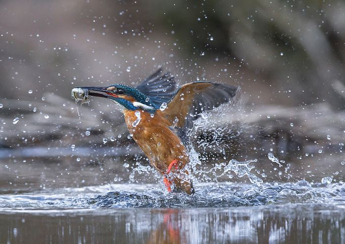 Two at a time by Argatykites - Get Wet Photo Contest