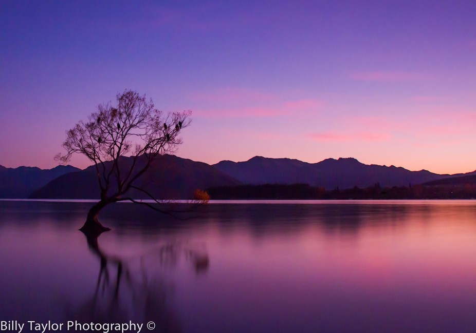 That tree in Wanaka, New Zealand - The most photographed tree in the country.