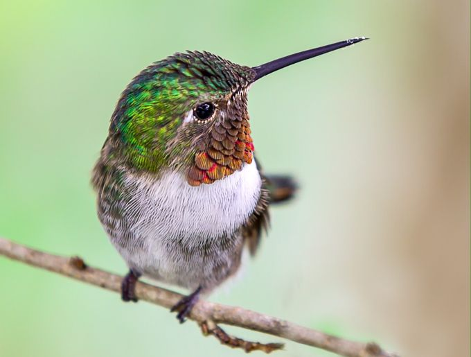 HummingbirdCloseUp by CarolineHuard - Small Things In Nature Photo Contest