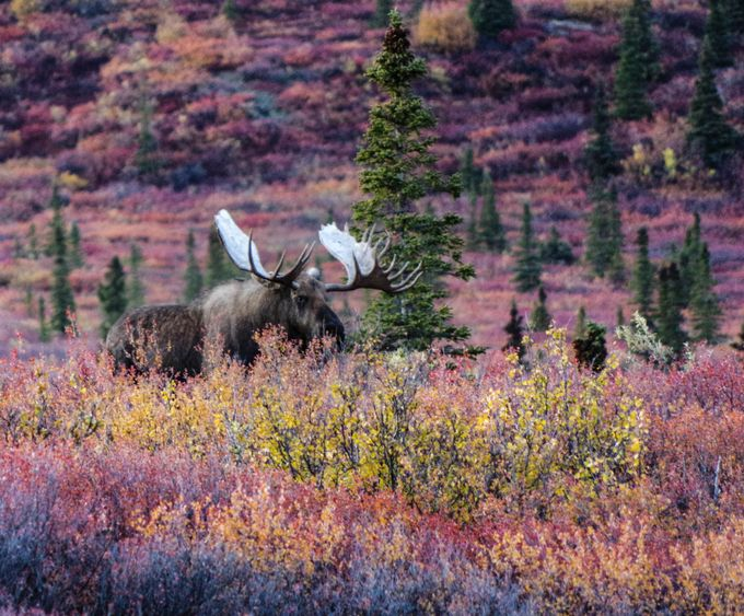 IMGP2694 by Sorley_Photography - Alaska The Wild Photo Contest