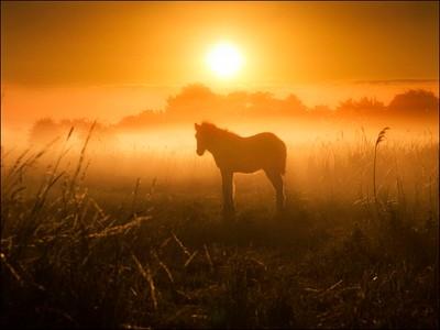 The Golden Foal