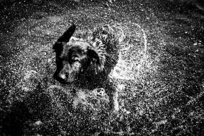 260A4445 by carlosalvarezalvarez - Get Wet Photo Contest