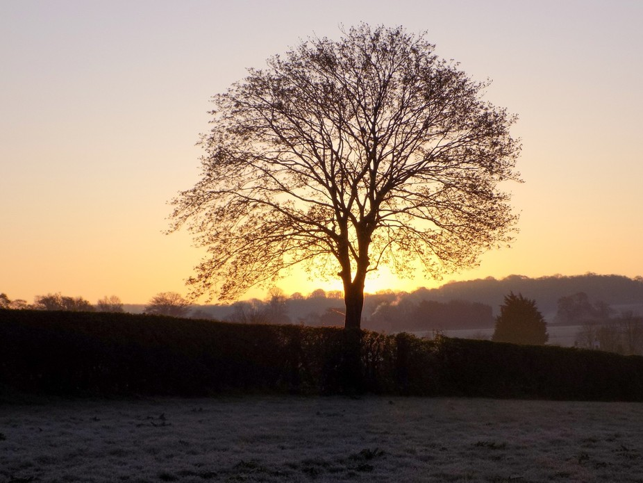 Sunrise behind tree on frosty morning.