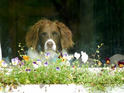 Window Doge