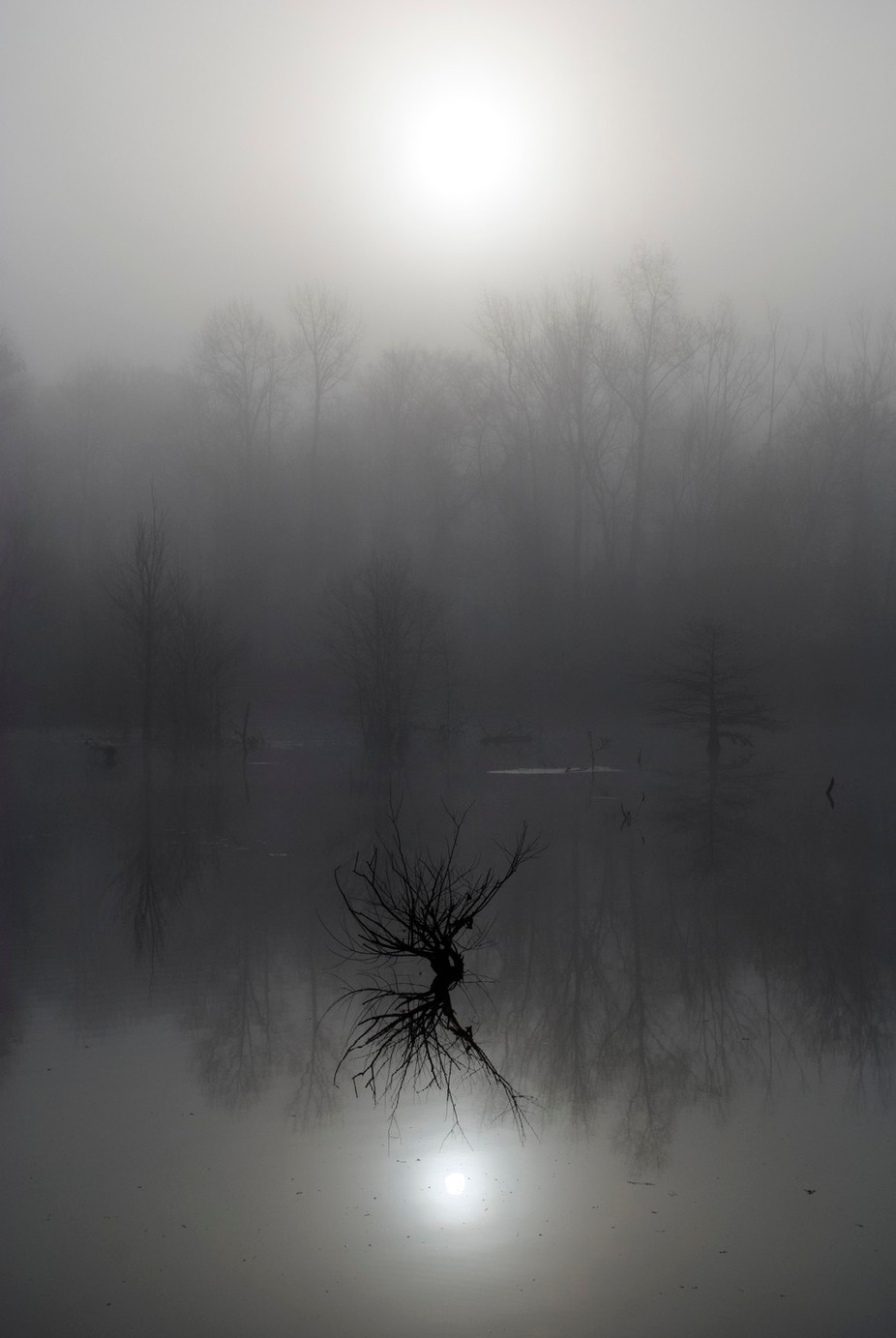 foggy shadow tree by sockeblu2 - Your Point Of View Photo Contest