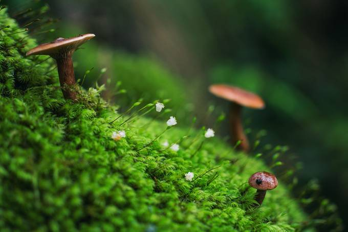 Little World by DrewHopper - Mushrooms Photo Contest