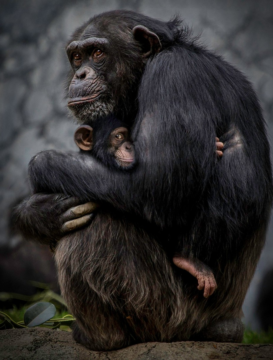 Embrace by JennyLoren - Happening At The Zoo Photo Contest