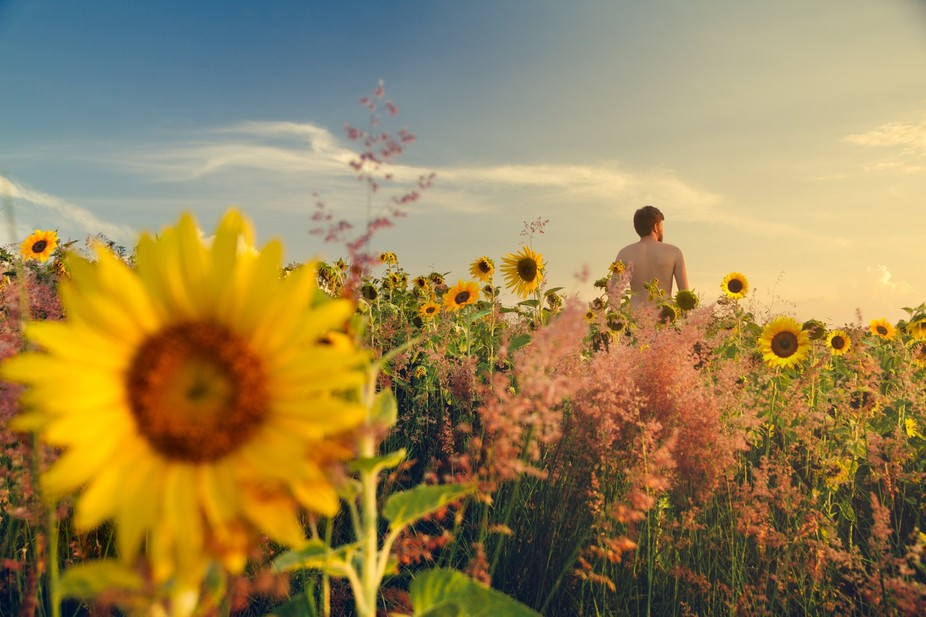 A field of sunflowers and a naked man.
