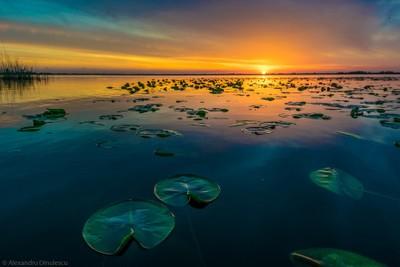 Sunrise in Delta