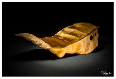 Feuille (Leaf)