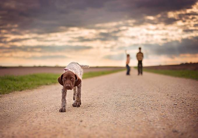 The Wonderer by Tiona2 - Kittens vs Puppies Photo Contest