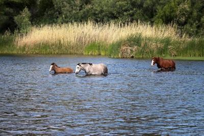 Wild Horses-1