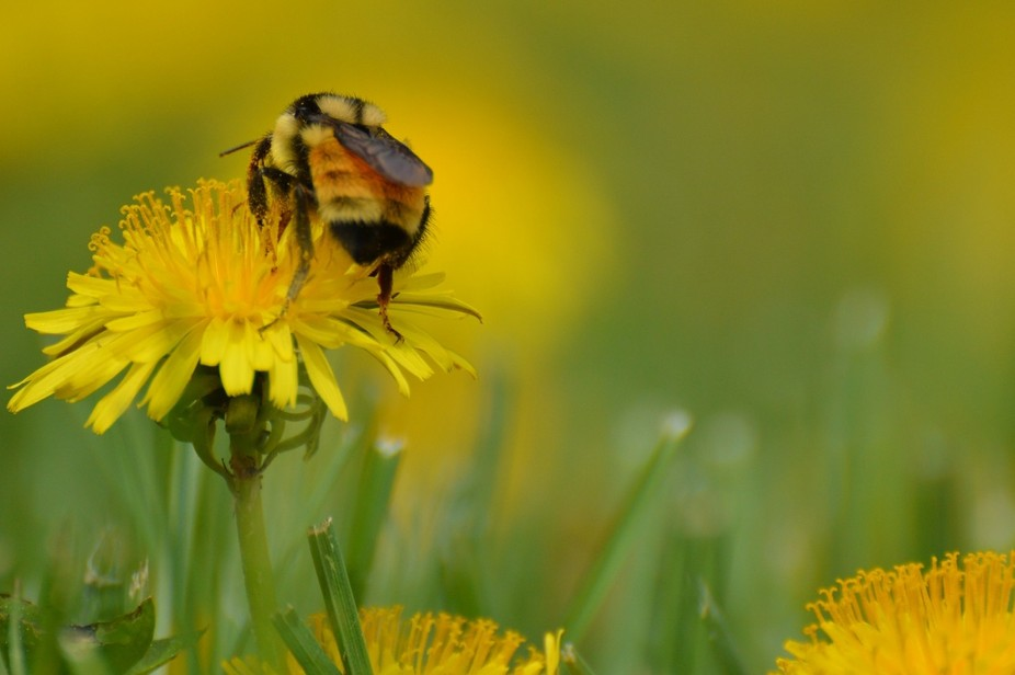 The Spring Buzz