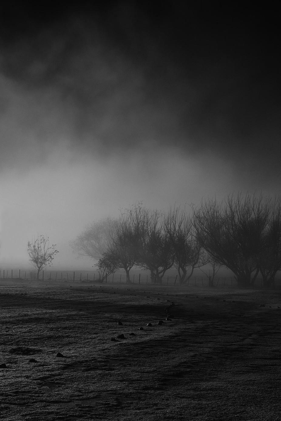 trees by vladimirchuyko - Tree Silhouettes Photo Contest