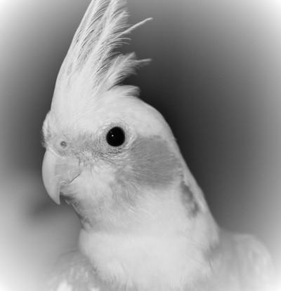 black and white nemo