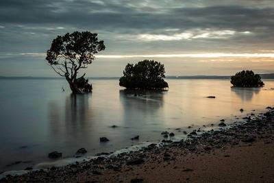 Long Exposure Tenby Point Mangroves