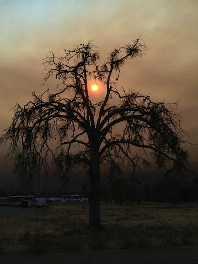 Eerie Tree 1