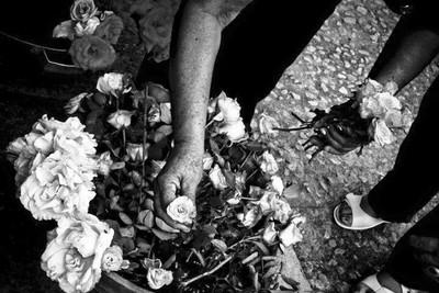 Tias Hands Picking Flowers