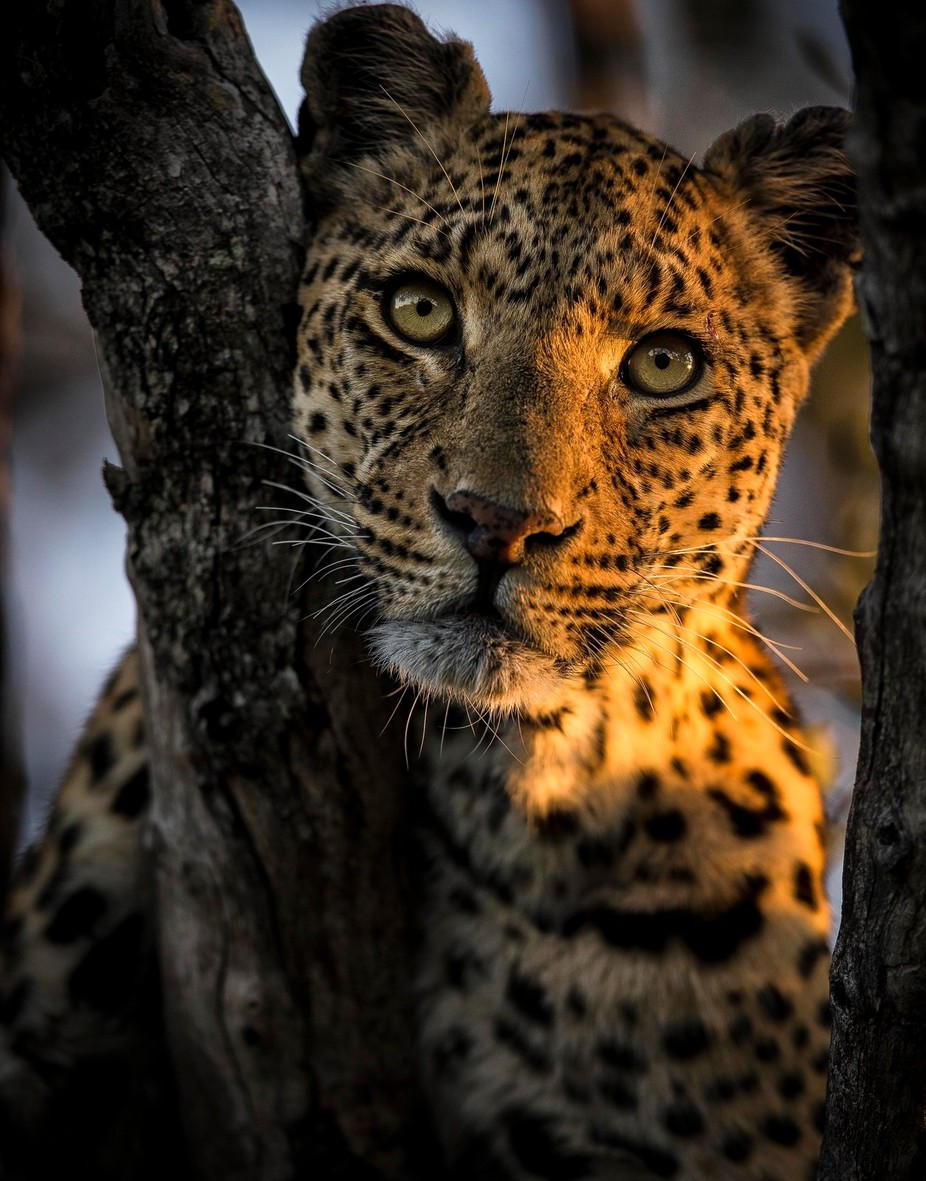 Beauty by chrisfischer - Wildlife Photo Contest 2017