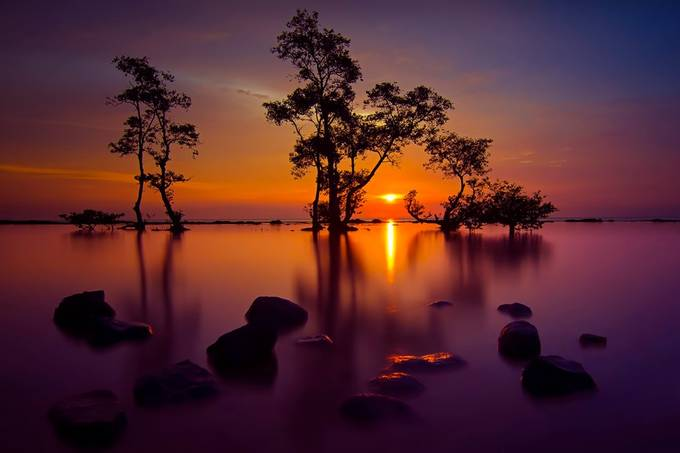 When Evening Comes by chandrairahadi - Silhouettes Of Trees Photo Contest