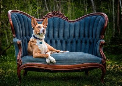 Sir Jasper