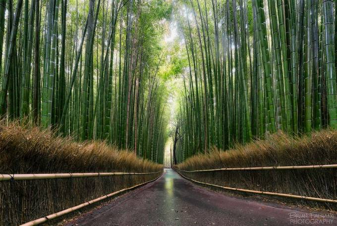 Early Morning Bamboo Road by brianfabiano
