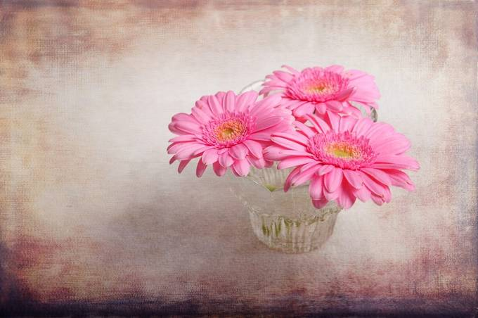 Three of Us by GracefulFoto - Pink Photo Contest