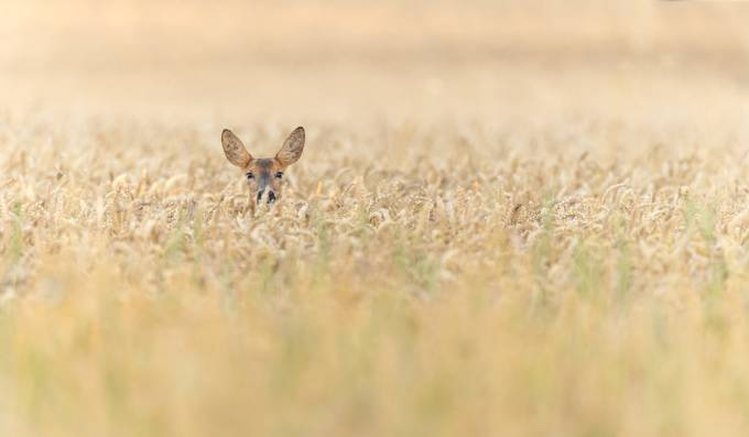 ears by bridgephotography - Can You See Me Photo Contest