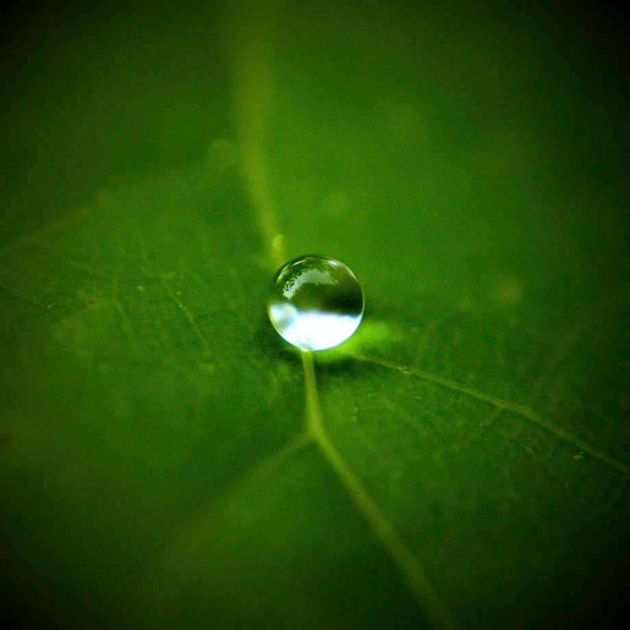 After rainfall I took my macro lens and headed outside to shoot raindrops. How could I not enjoy the isolated subject on a single green leaf shaped perfectly round. Almost like a marble.
