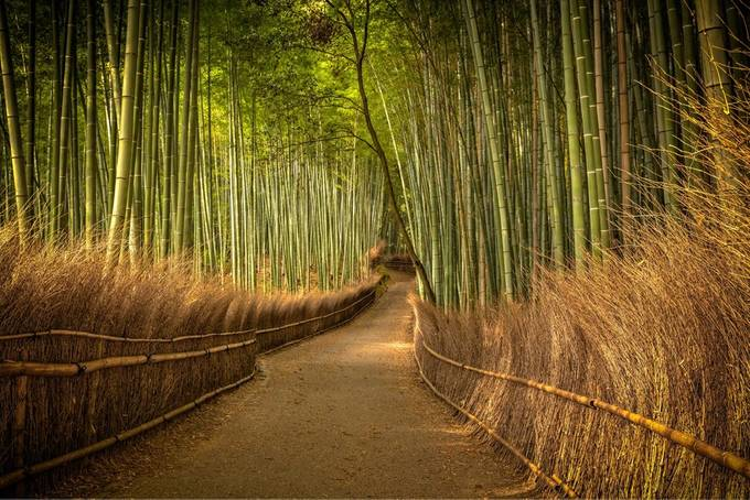 Bamboo Forest by wojciech_toman - Explore Asia Photo Contest