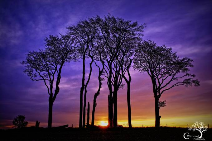 Rainbow Trees  by clivewinward - Silhouettes Of Trees Photo Contest