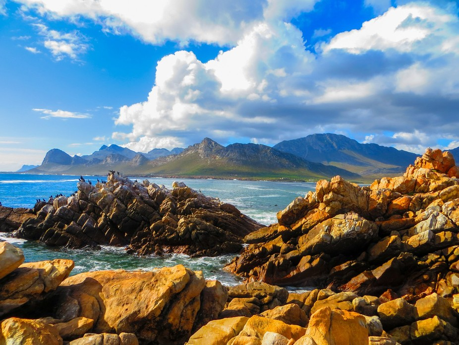 This image was taken near Pringle Bay, in the Cape, South Africa.