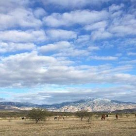 Tucson winters are beautiful.  Here is an east view image with snow cap mountains and horses roaming