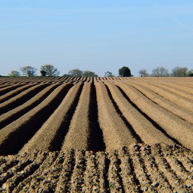 New ploughed field in Norfolk, UK.