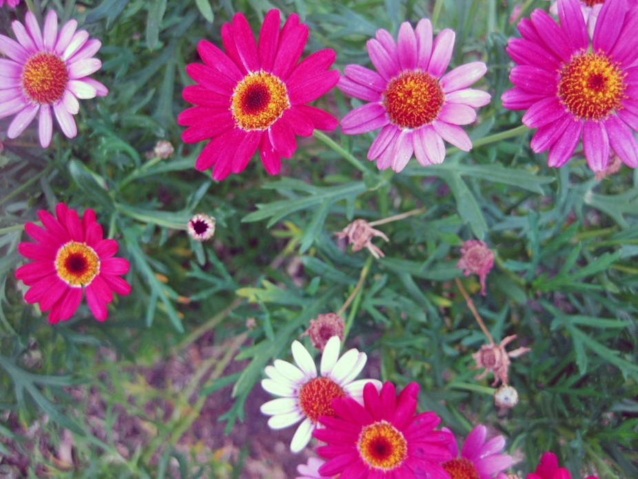 flowers IMG_5484