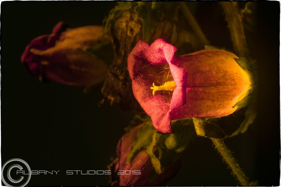 flower--004-essence-copy