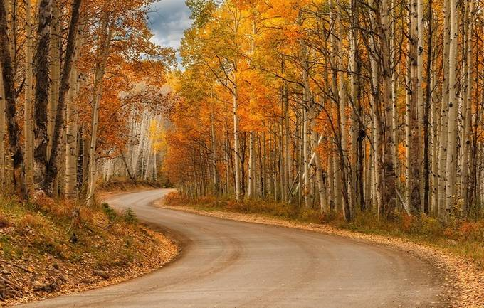 Road in Fall by Pgtravers - Composing with Curves Photo Contest